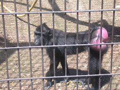 DSCN7162 (Can-explorer) Tags: zoo brantford twinvalley