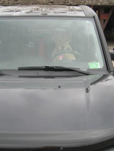 Fester Driving