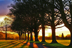 into the Sun (algo) Tags: trees light england sun topv111 photography interestingness topf50 topv333 bravo shadows topv1111 topv999 explore backlit avenue algo topf100 soe topf200 100f halton themoulinrouge blueribbonwinner supershot magicdonkey 50f explore3 platinumphoto holidaysvacanzeurlaub 200750plusfaves treesubject megashot fabuloustreessunlight