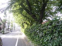 王子再訪04.引込み線の桜並木