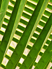 Palm I (Daniel Schwabe) Tags: abstract green leaf pattern geometry palm interestingness438 i500 abstractartaward explore1jan08