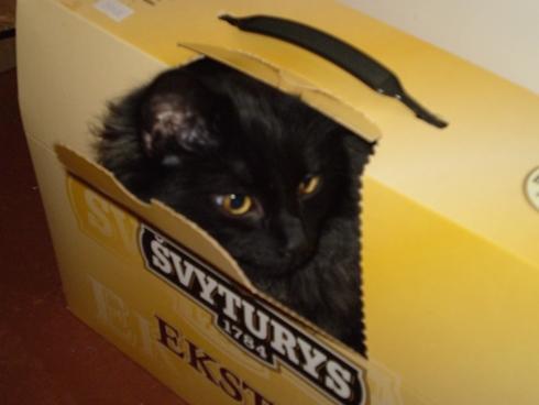 Katė dėžėje