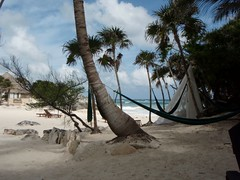 Tulum beach (FlckrBrnd) Tags: sun beach tulum palmtree mexiko yuccatan
