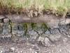 Macam-macam tanah