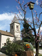 tramin church (Jon Shave) Tags: church spring blossom tramin tramino