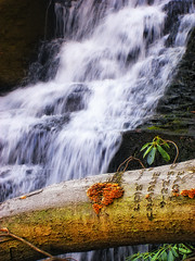 Enduring (Nicholas_T) Tags: creek forest waterfall stream hiking pennsylvania falls creativecommons poconos ravine coniferous monroecounty rattlesnakecreek barretttownship sevenpinesmountain rattlesnakefalls stategamelands221 stategameland221 sgl221