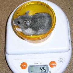 コー太は体重が少し減りました