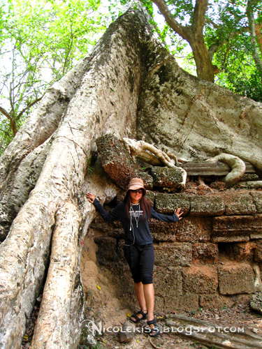 huge tree trunk at ta prohm