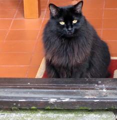 Bolli watching me garden
