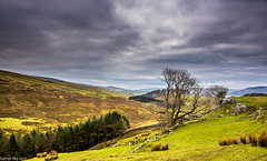 Down The Valley! (dazzbo1) Tags: ngc landscape valley hills mountains peaks walk hike yorkshire dales uk england horton ribblesdale weather storm rain cloud mist fog colour tranquill beatiful atmosphere tree trees sky cragg limestone rocks field threatening penyghent