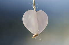 When heart hangs by a thread (Bego Alcántara) Tags: background closeup concept day emotion form gift heart hearted love nature nobody one rock romance romantic shape shaped single stone stony symbol texture valentine valentinesday macromondays