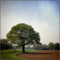 the tree from the garden of Delights..... (Zino2009 (bob van den berg)) Tags: favorite tree green texture grass proud spring oak alone painted creative schilderij single meander lente schaduw zon picnik deventer eik landschap trots alleen paining eenzaam personalfave voorjaar schadow tekoop solitair schipbeek eikeboom mahlerei zino2009 bobphotography