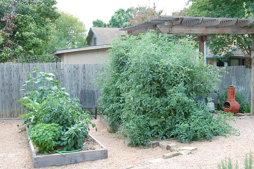 the garden 5/2011