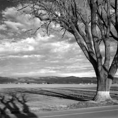 FrankaScan-100110-0003 (Rob Michalski) Tags: california edu ultra franka spreckels arista solida