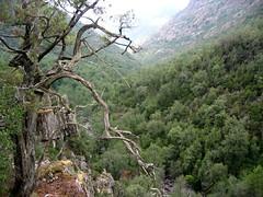 Sentier RG de la Cavicchia : la prise d'eau en aval