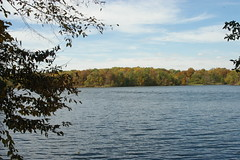 (runntherain) Tags: lake fall water tress