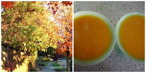 Fall color + Mango pudding = visual poetry