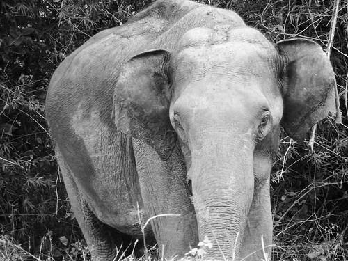 Yound elephant @ Bandipur