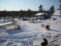 husky dogs farm in lapland 02 (ezioman) Tags: winter dog snow dogs nature finland husky europa europe arctic lapland sleddog sledge lapponia huskyfarm huskydog