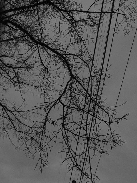utter greyness