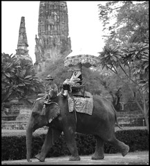Elephant in Thailand (earlb.com) Tags: trip travel bw elephant animals umbrella thailand ancient women ruins asia bangkok documentary kingdom unesco worldheritagesite thai ayutthaya ancientruins thaiwomen onephotoweeklycontest
