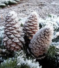 Frost cones