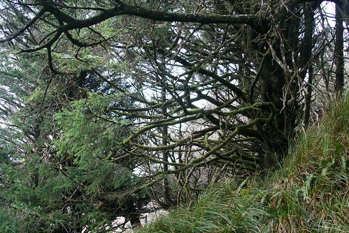 Woods at Ocean Crest