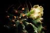 Light-painted cactus DSC_6964