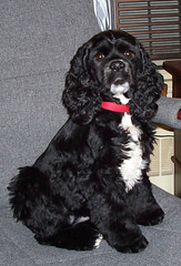 Maggie May - Feb 08