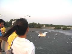 Closed up Seagull Bangpoo - Samutprakarn