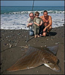 BIG BULL RAY (ESOX LUCIUS) Tags: fish ray taco lapalma atlanticocean saltwater fishspecies fishspeciesgroup fishbase bullray pteromylaeusbovinus vleermuisadelaarsrog photosrudyvanduijnhoven pteromylaeus