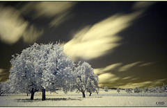 Speedy Clouds (Monika Ostermann) Tags: trees sky bw cloud sun tree nature monochrome grass sepia clouds ir switzerland himmel infrared sw gras baum acre