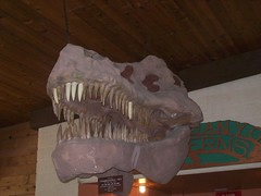 T-Rex model skull (hamlette2002) Tags: alex fieldtrip grandcanyoncaverns