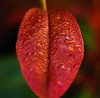 Wet (edwardleger) Tags: color nature water rain leaf 2008 abigfave edwardleger thegardenofzen exquisiteimage edwardnleger