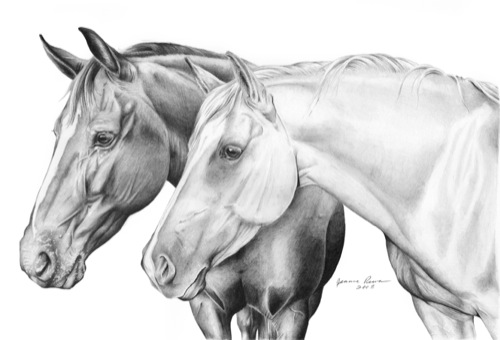 15 Mead Portrait by jeannerRealistic Horse Drawings
