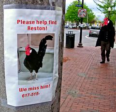 please help find Reston! (sandcastlematt) Tags: silly chicken sign photoshop missing funny massachusetts somerville rooster davissquare elmstreet reston reallybadphotoshop bostonist missingchicken universalhub