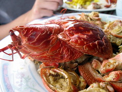 Coconut Crab (Shank) Tags: batanes coconutcrab