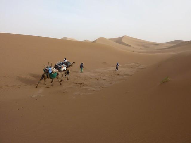 5715115497 8c8de099b0 z Do you have a New Years Eve plan? Come to the Sahara Desert