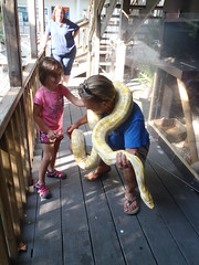 Mojo the albino python