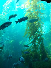 kelp forest 5 (axellrose00) Tags: family vacation aquarium monterey carmel