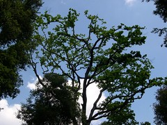 ortobotanico 211 (blum1) Tags: alberi fiori piante ortobotanico