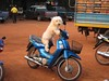 A dog patiently waiting on a moped…