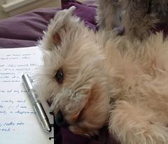 cute dog lying next to journal