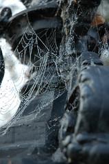Webbed Droplets (i is Ashby) Tags: morning droplets nikon d70 web cobweb dew stafford ashby tbg thebiggestgroup