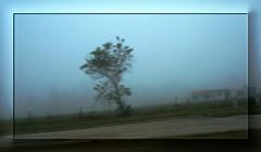 Foggy Morn (Adventures of KM&G-Morris) Tags: morning mist tree nature fog texas scenic houston commute