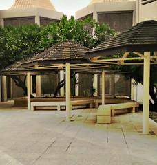 Qatar university (qatari star) Tags: old tree university doha qatar      qataruniversity