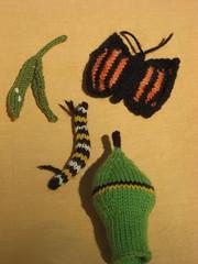 monarch life cycle pics - 1