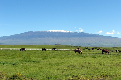 Mauna Kea from Waimea, Parker Ranch