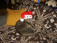 [Voeux] Joyeux Noel & Bonne année ! 2124716442_5014efc258_m