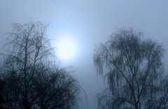 Morning - December sun (wit) Tags: blue deleteme5 trees winter deleteme8 cold deleteme deleteme2 deleteme3 deleteme4 deleteme6 deleteme9 deleteme7 silhouette fog tag3 taggedout tag2 tag1 deleteme10
